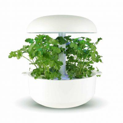 Bladpeterselie Navicula Smart Garden Kruiden Plantui white wit aquaponie