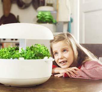 Smart Garden Kruiden in huis