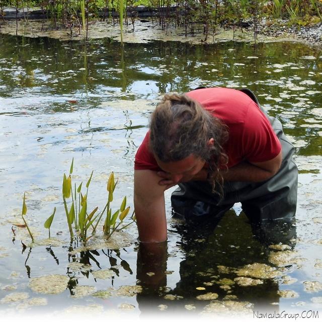 koen vanhoutte vijveronderhoud zwemvijver navicula vijverstofzuiger