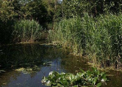 Drijvend eiland en vijver in Camley Street Natural Park 001