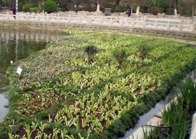 Drijvende Eilanden Yingri Lake China 02102018 003