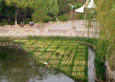 Drijvende Eilanden Yingri Lake China Algenbestrijding