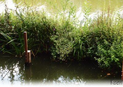 Verankeringspalen Azobe met Drijvende Eilanden Plantenfilters