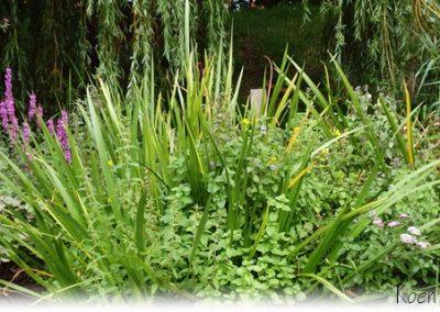 Diverse bloei in waterplanten op drijvend eiland