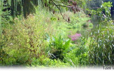 De Stikstofcrisis tot 8 x Effectiever Aanpakken met Drijvende Planteneilanden