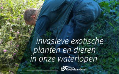 Invasieve exotische planten in onze waterlopen.