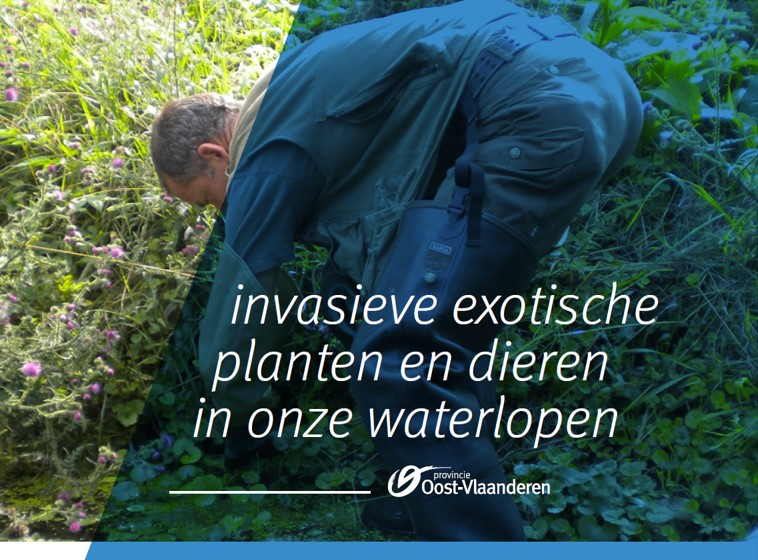 invasieve exotische waterplanten en dieren in onze waterlopen.