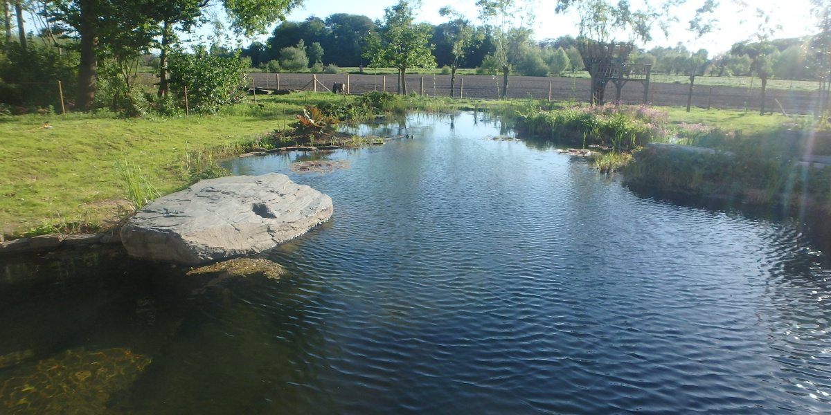 Landschappelijke zwemvijver met beekloopfilter en wilgen op de achtergrond.