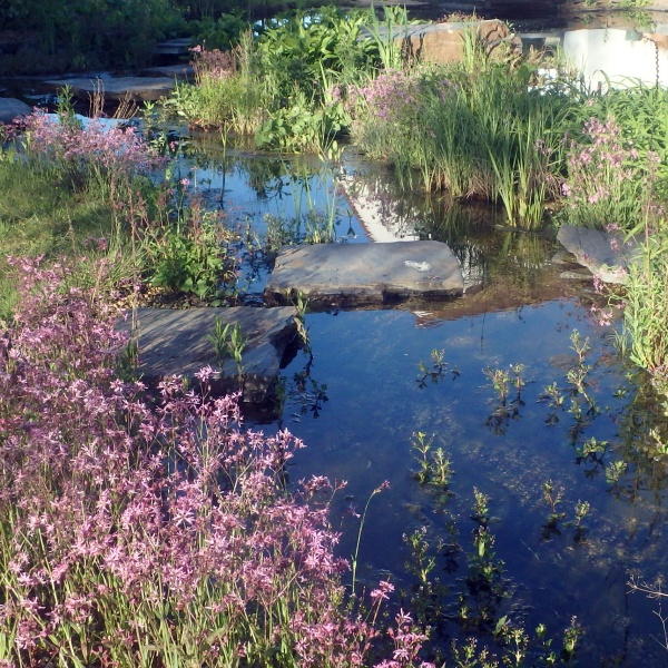 Plantenfilter in een zwemvijver met Lychnisc flos cuculi in bloei.