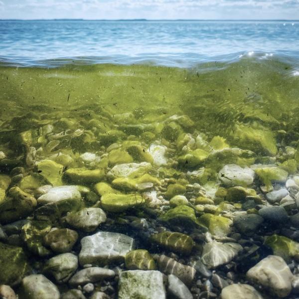 Organisch materiaal en algen tussen keien en stenen. Foto door Saketh Garuda.