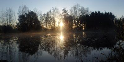 Vlaams herfstlandschap te Waasmunster met wilgen, mist op de paardenweide en waterlelies op de zwemvijver.