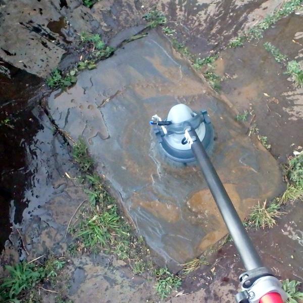 Egel op fourageer tocht en langs de zwemvijver vindt die drinkwater.